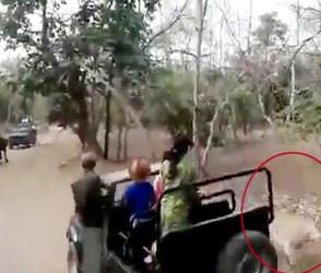 ભેંસ વીફરી તો કોઈની નહીં, જંગલના રાજા સિંહને પણ ઉભી પૂંછડીએ ભાગવું પડ્યું, દિલધડક Video વાયરલ