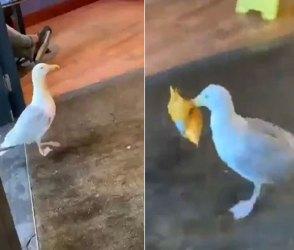 Video: આ પક્ષીએ ખુબજ ચાલાકીથી કરી વેફરની ચોરી, જોનારા આશ્ચર્ય ચકીત રહી ગયા