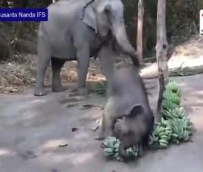 World Elephant Day: મોજમાં આવ્યું મદનીયું, આ ક્યુટ Video ચહેરા પર મુસ્કાન લાવી દેશે