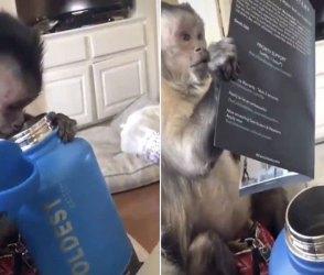 Video: પાણીની બોટલ ખોલી વાંદરાએ કરી એવી હરકત જોઇને થઇ જશો આભા, પેટ પકડીને હસતા રહી જશો