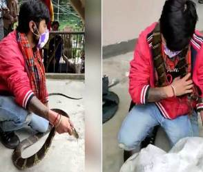 VIDEO: ઘરમાં ઘુસી ગયો કિંગ કોબ્રા, પકડનારે પકડી તો લીધો પણ અચાનક જ ઉછળીને ગળામાં…