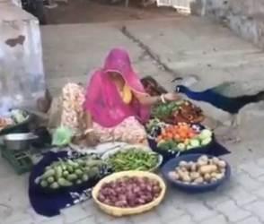 દયા અને કરુણાનો આ વીડિયો સૌથી અલગ તરી આવ્યો, જુઓ ક્યારેય ન જોયેલા અદ્ભૂત દ્રશ્યો!