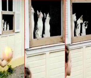 3 બિલાડીઓની એકીટસે જોવાની સ્ટાઈલના સૌ કોઈ મુરીદ થયાં, વીડિયો શેર કરી યુઝરોએ મજા લીધી