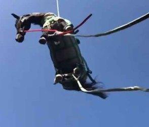 60 ફૂટ નીચે ખીણમાં એક ઘોડી ફસાઈ હતી, રેસ્ક્યૂ ટીમે હેલિકોપ્ટરથી બચાવી લીધી! વીડિયો વાયરલ