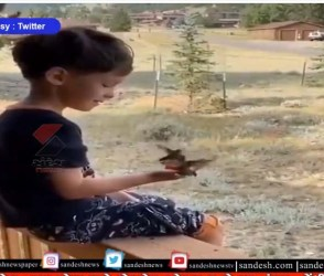 આ નાના પક્ષીઓ અને બાળકની મિત્રતા છે અનેરી, આ વીડિયો જોઈને તમે પણ કહેશો જોરદાર છે, જુઓ VIDEO