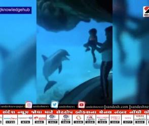 અરે વાહ ! આ રમતી બાળકીને જોઈને ડોલ્ફિન પણ હસવા લાગી, જુઓ આ મજેદાર વીડિયો