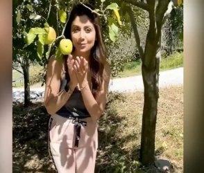 Video : શિલ્પા શેટ્ટી સફરજનને જોઇને ઉછળી પડી, ખુશીથી બોલી બટેટાના ભાવે લઇલો આ ફળ