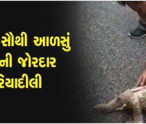 VIDEO: વિશ્વના સૌથી આળસું પ્રાણીને આ શખ્સે રસ્તો ક્રોસ કરવામાં કરી મદદ, પછી થયું જોયા જેવું