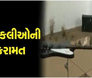 VIDEO: 70 ચકલીઓની કરામત પર આખું ગામ ફિદા થઈ ગયું, એવી અજીબ રીતે ગિટાર વગાડ્યું કે…