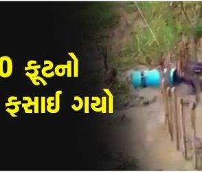 નદી કાંઠે 50 ફૂટનો સાપ ડ્રમમાં ફસાયો અને તરફડતો રહ્યો, વીડિયો જોનારાની આંખો ફાટી ગઈ!