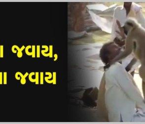 VIDEO: આ વડીલને પૂછજો કે લંગૂર પાસે જવાય? સાત વખત જવાબ મળશે કે-ના જવાય, ના જવાય….