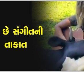 VIDEO: આ મહિલાએ એવું ગિટાર વગાડ્યું કે ગાય સાંભળતા-સાંભળતા જ ખોળામાં સુઈ ગઈ