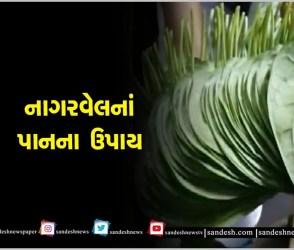 મંત્ર અને નાગરવેલનાં પાનથી જગતગુરુ શ્રી કૃષ્ણને પ્રસન્ન કરવાના શાસ્ત્રોક્ત ઉપાય,Video