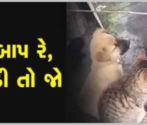 આ કડકડતી ઠંડીમાં તાપણું કરી રહ્યા કુતરા અને બિલાડી, ક્યુટ વીડિયો થયો વાયરલ