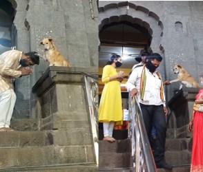 OMG! મંદિરની બહાર કૂતરુ આપી રહ્યું છે ભક્તોને આશીર્વાદ, વારંવાર જોવાઇ રહ્યો છે વીડિયો