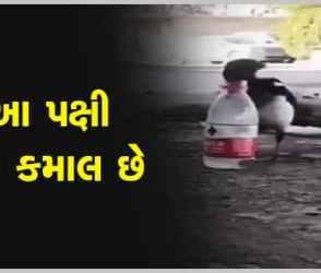 Viral Video : વાહ રે વાહ ! આ પક્ષીએ તો કમાલ કરી દીધી