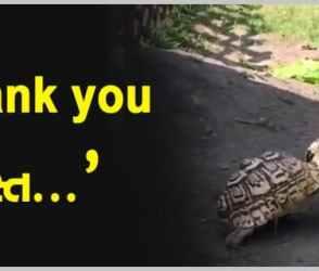 Thankyou Dost ! એક કાચબાએ બીજા કાચબાને કરી એવી મદદ કે તમે પણ કહેશો વાહ રે વાહ !
