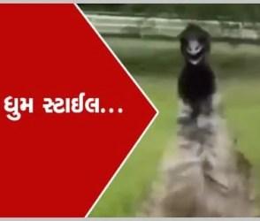 Viral Video : શાહમૃગની ધુમ સ્ટાઈલ, આ વ્યક્તિની પાછળ એવું પડ્યું કે ભાઈના હોંશ ઉડી ગયા