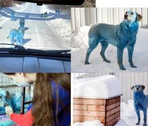 આ શહેરમાં કુતરાઓના રંગ અચાનક વાદળી રંગના થઈ ગયા, કારણ જાણીને ચોંકી જશો