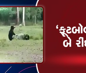 Viral Video: રીંછ મમ્મી-રીંછ બેબી સાથે રમી રહી છે ફૂટબોલ