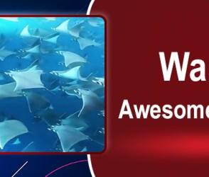 Video : માછલીઓનો સુંદર નજારો જોઈને દિલ ગાર્ડન ગાર્ડન થઈ જશે