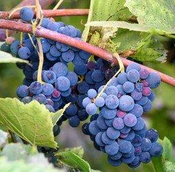 Rondreis Georgië Food/Wine Pop Up