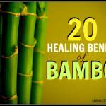 20 Healing Benefits Of Bamboo Remedygrove Holistic Wellness