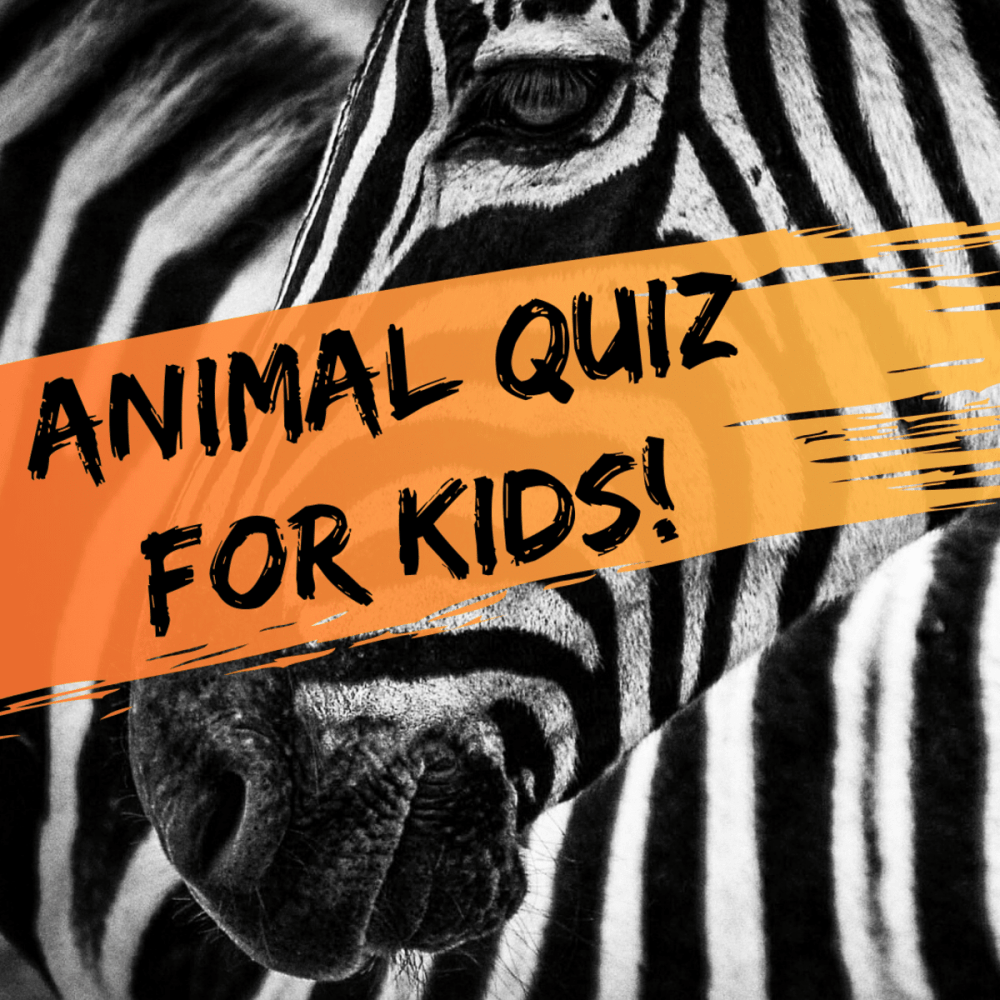 medium resolution of Multiple-Choice Quiz for Kids: Fun Animal Trivia Questions - WeHaveKids -  Family