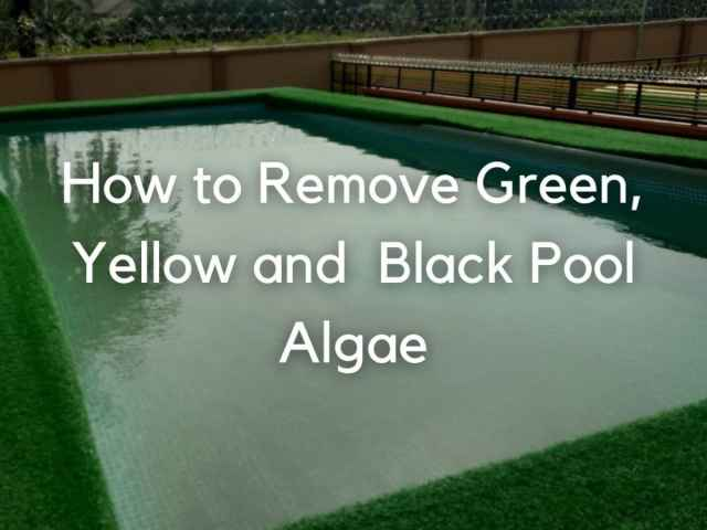 How to Get Rid of Green, Yellow, and Black Pool Algae - Dengarden