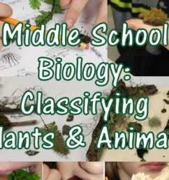 Classifying Plants \u0026 Animals: A Christian Middle School Biology Lesson -  HubPages [ 900 x 1200 Pixel ]