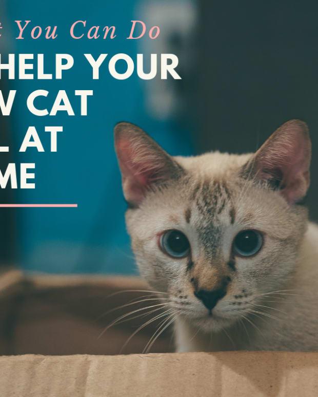 When Your Cat Dies: Gentle Tips to Heal Your Grieving ...