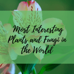 Top 20 Weirdest And Most Interesting Plants And Fungi In The World Owlcation Education