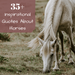 Inspirational Horse Quotes From Famous Historical Equestrians Pethelpful By Fellow Animal Lovers And Experts