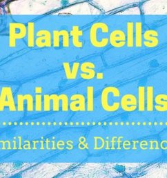 Plant Cells Vs. Animal Cells (With Diagrams) - Owlcation - Education [ 799 x 1200 Pixel ]