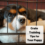 5 Tips On Crate Training The Nice Way To Crate A Puppy Pethelpful By Fellow Animal Lovers And Experts