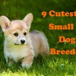 9 Of The Cutest Small Dog Breeds Pethelpful By Fellow Animal Lovers And Experts