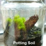 How To Make A Terrarium In A Jar Dengarden Home And Garden
