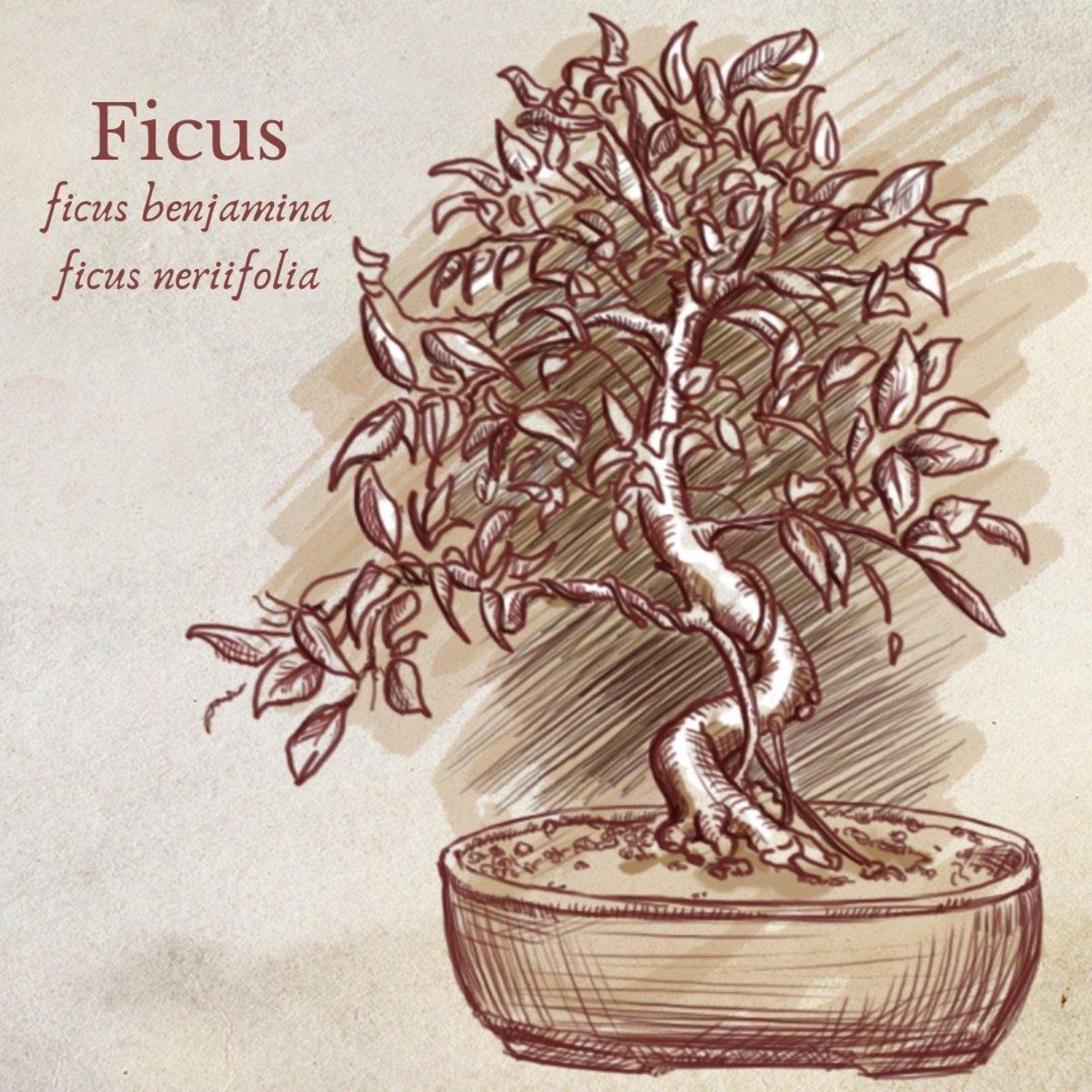 species that make great indoor bonsai