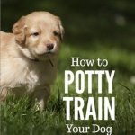 How To Potty Train A Dog In 7 Days Pethelpful By Fellow Animal Lovers And Experts