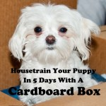 How To Housetrain A Puppy In 5 Days Using A Cardboard Box Pethelpful By Fellow Animal Lovers And Experts