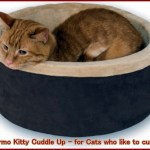 Recommended Heated Cat Beds Indoor Outdoor And Alternatives Pethelpful By Fellow Animal Lovers And Experts