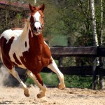 Top 5 Horse Breeds For Barrel Racing Pethelpful By Fellow Animal Lovers And Experts