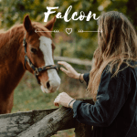 350 Perfect Pony And Horse Names For Riders Pethelpful By Fellow Animal Lovers And Experts