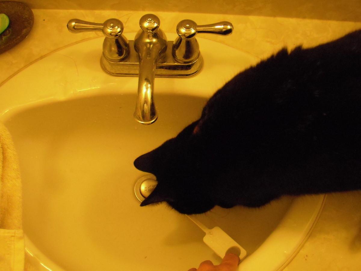 unclog your kitchen sink drain tonight
