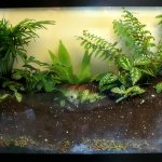 How To Make A Plant Terrarium Dengarden Home And Garden