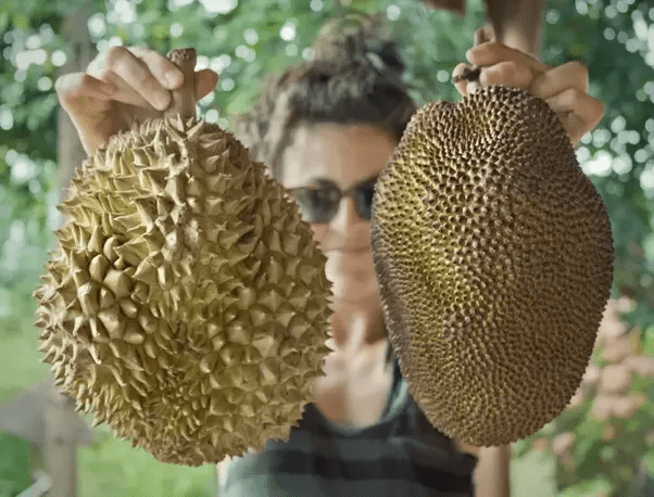 Durian (left) and jackfruit (right).