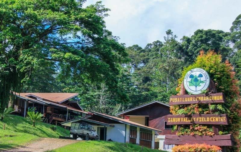 Image from Amazing Borneo Tours
