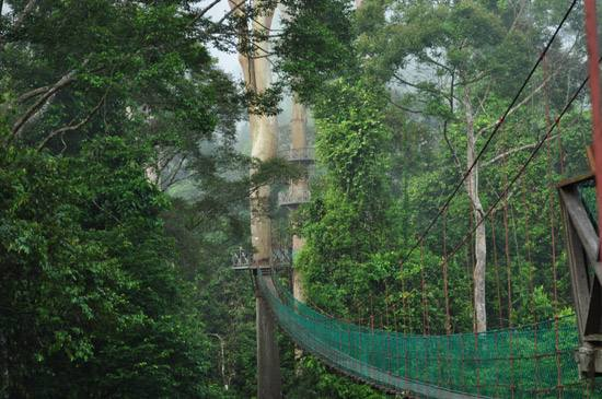 Image from Danum Valley