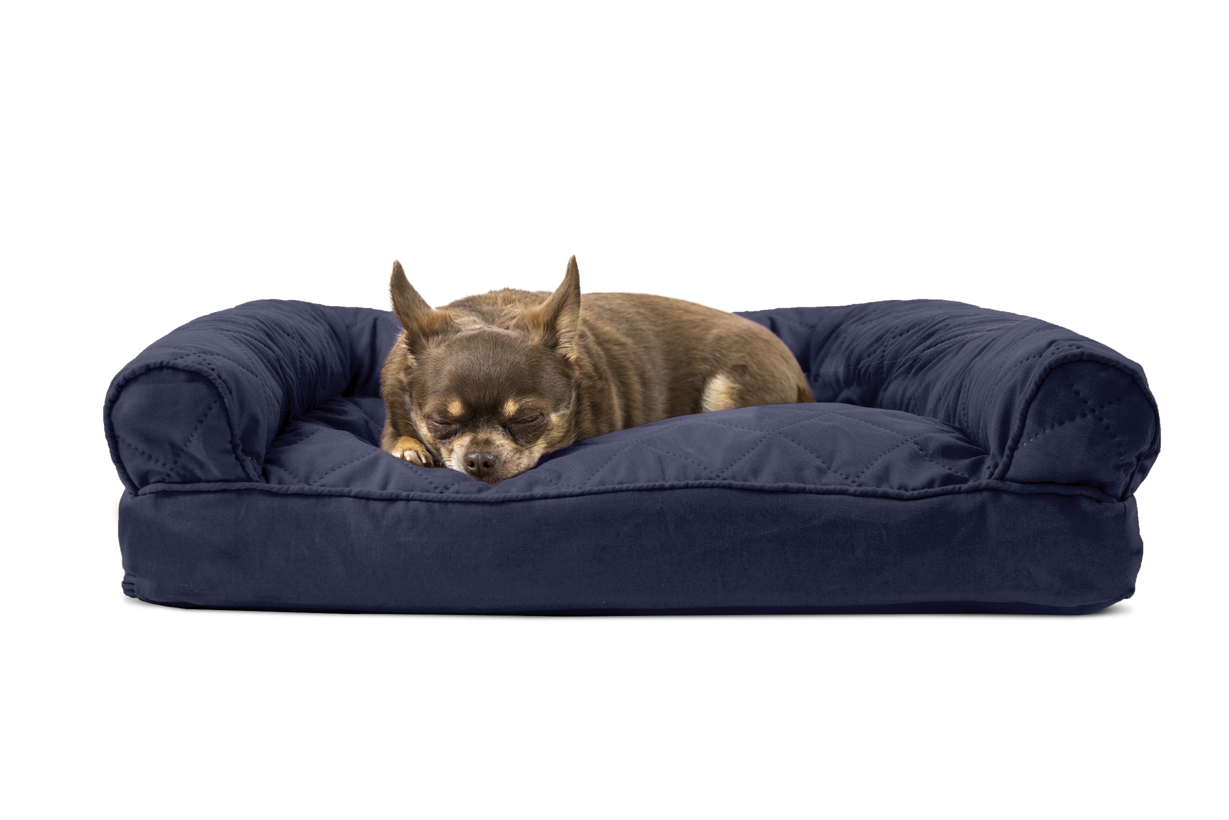 mini dog sofa orange turns into bunk bed pet beds you ll love wayfair thesofa