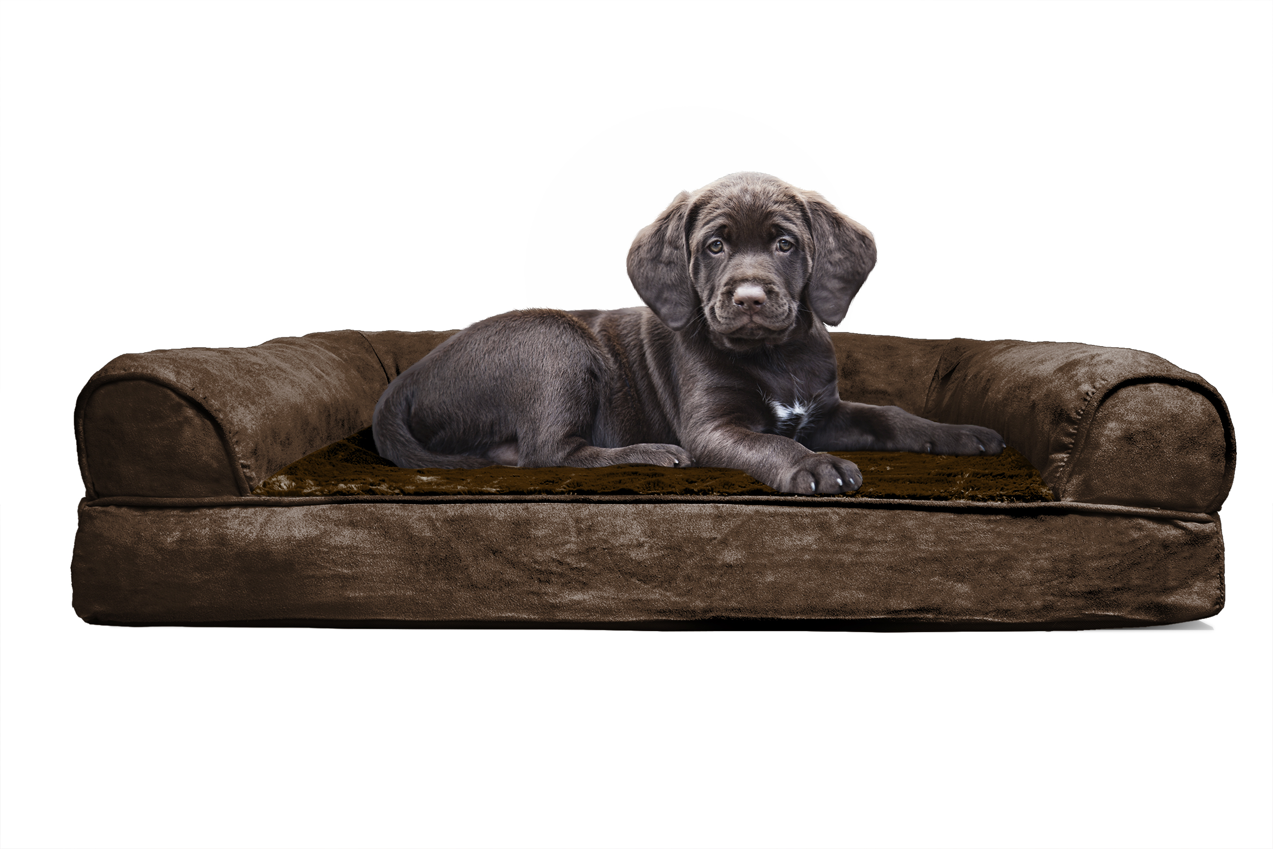 mini dog sofa king bed reviews small 25 unique ideas on pinterest